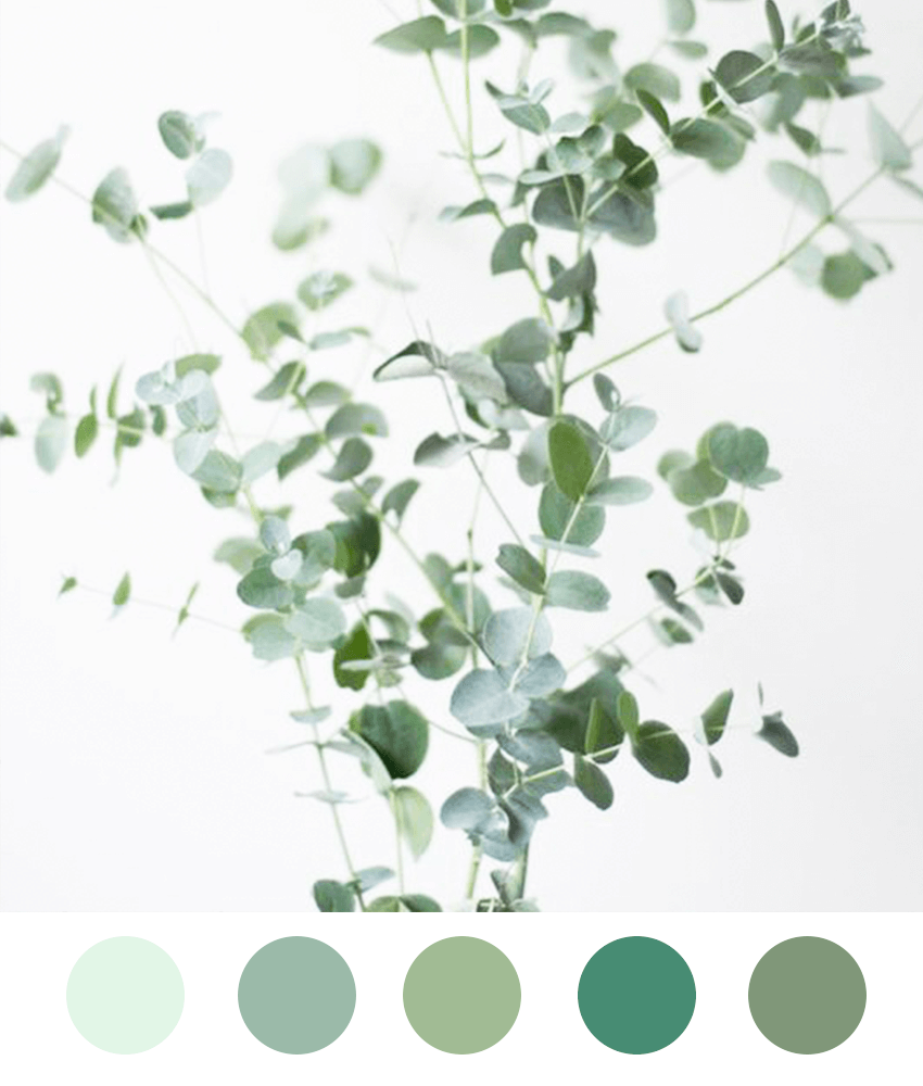 Trending Color Palettes Perfect for a Party